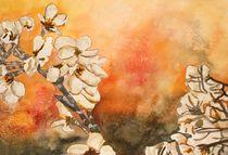 Cherry-blossum