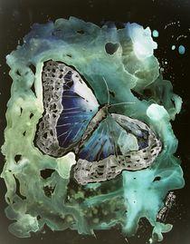 modern butterfly by Derek McCrea