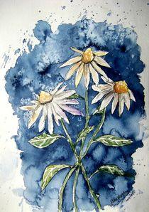 daisies by Derek McCrea