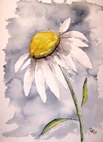Daisy  by Derek McCrea