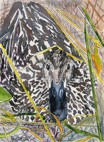 mallard duck by Derek McCrea
