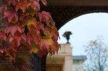 letzter Herbstgruß by Martin Pepper