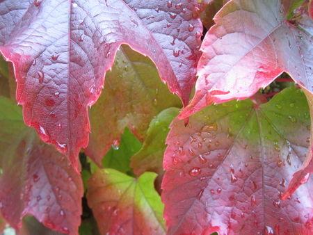 Herbsterfrischung
