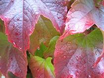 Herbsterfrischung von tola58