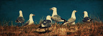 The Seagulls by AD DESIGN Photo + PhotoArt