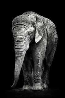 Trauriger Elefant by Martin Dzurjanik