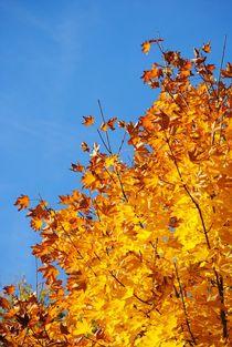 Baum in Flamen  by Elke Balzen