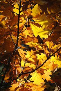 Herbstlaub von Elke Balzen