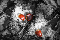 Selective Chestnuts von David Tinsley