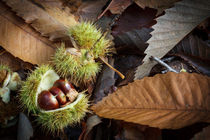 Chestnuts and Leaves by David Tinsley