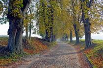 Allee im Herbst auf Rügen by Eberhard Loebus
