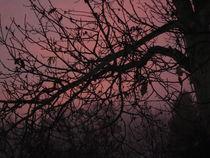 Morgensonne im Frühnebel von tola58