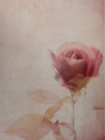 only a rose by Franziska Rullert