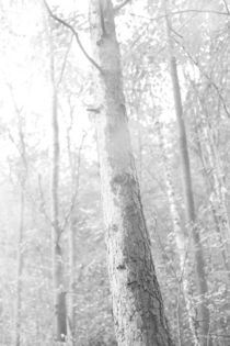 Nebel im Wald, schwarz weiss Foto by Kathleen Follert