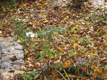 Einsam im Herbst von tola58