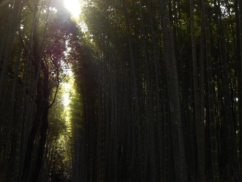 Dscn0728-sendero-de-banboo-en-kyoto