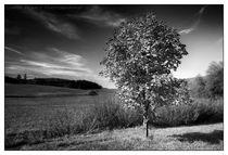 Der Herbstbaum von Chris Rüfli Photography