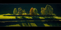 Baumgruppe von Chris Rüfli Photography