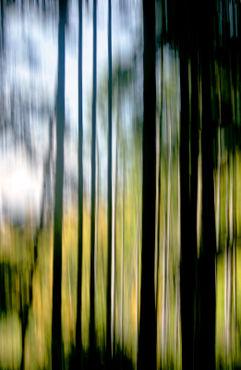 Im-lichten-fichtenwald