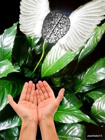 Peace Lily For The Consciousness by Paulo Zerbato