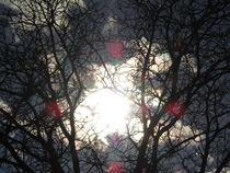 Wunderbaum von tola58