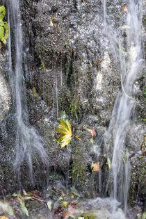 kleiner Wasserlauf, Farbfoto von Kathleen Follert