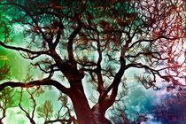 Herbstfarben von Barbara  Keichel