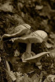 Pilze im Tiroler Wald, sepia Fotografie 2013 von Kathleen Follert