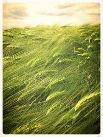 Field von Jo Holz