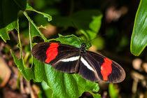 Pretty postman butterfly von Craig Lapsley