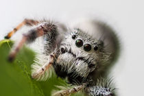 white hairy spider close up by Craig Lapsley