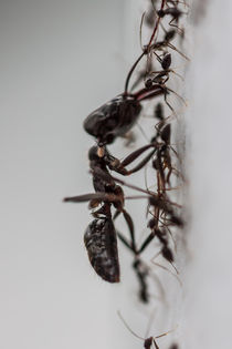 ants working together by Craig Lapsley