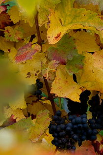Herbstwein hoch von Martin Pepper
