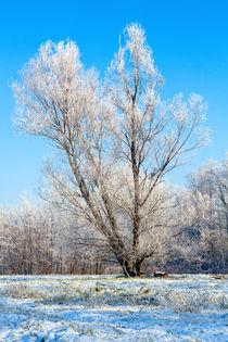 09122012-2012-12-09-999-131-winter-tree