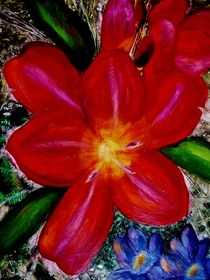 Blütenzauber by konni