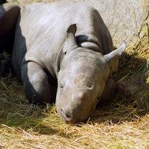 Träumendes Nashornkind, Dreaming Rhino Child von Sabine Radtke