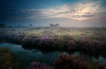 Misty morning by Olha Rohulya