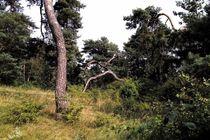 Baumwanderer von Torsten Jäger