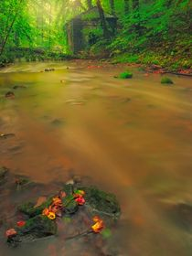 Golden river by Maciej Markiewicz