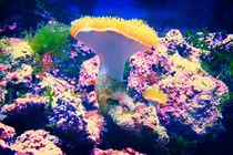 Koralle von mario-s