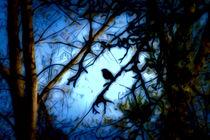Kleiner Vogel von mario-s