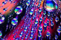 Bubble Mania von Kelly Love