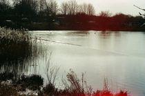 kleiner See mit Enten von Henning Hollmann