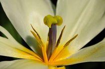 Blütenstempel Makro by Mark Gassner