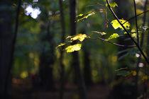 Herbst und Licht  by Rainer Golembiewski