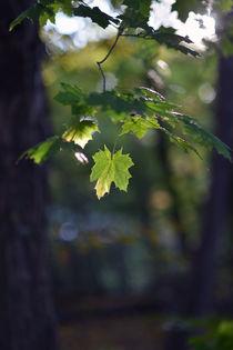 Offenbacher Wald im Herbst by Rainer Golembiewski