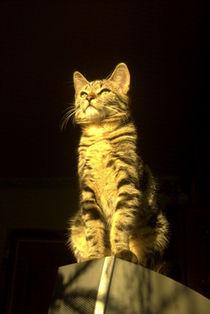 Katze im Sonnenschein von Henning Hollmann