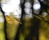 Herbstlichter by Rainer Golembiewski