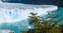 Moreno Glacier, Los Glaciares NP, Argentina by Tom Dempsey
