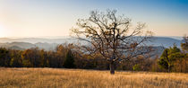 Lone tree, Blue Ridge Mt, Shenandoah NP, Virginia by Tom Dempsey